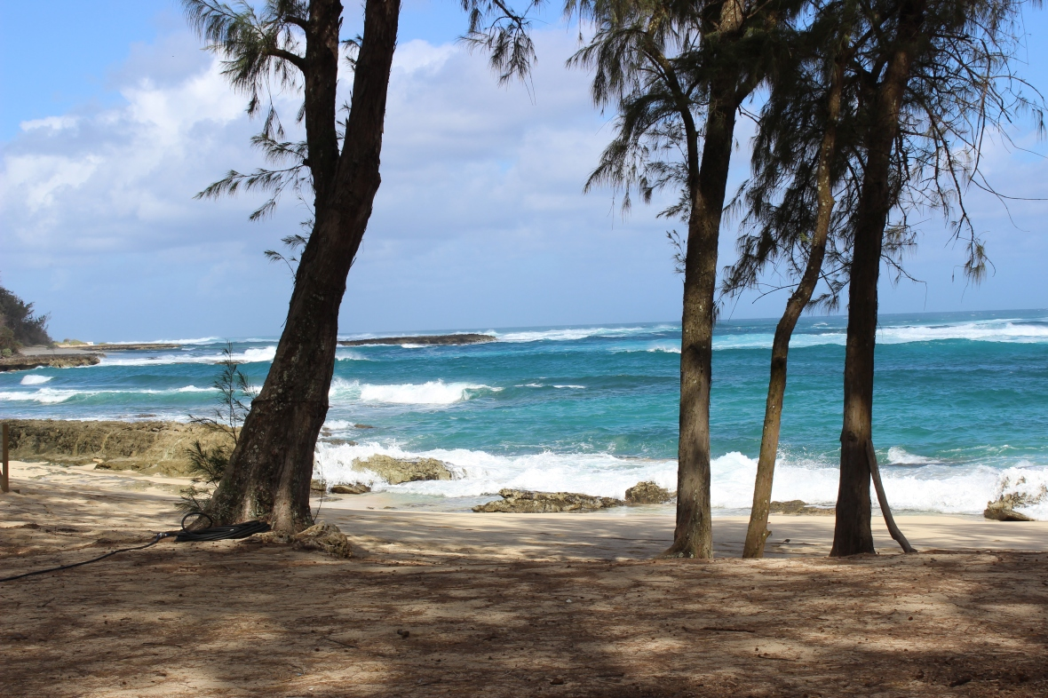 Views from along the trails at Turtle Bay