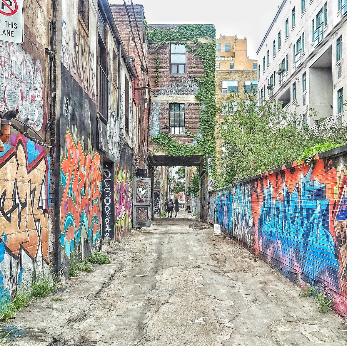 Graffiti Alley with ivy
